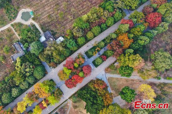 Nanjing's Shixiang Road a colourful attraction in autumn
