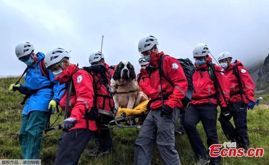 Roles reversed as St. Bernard dog rescued from England's highest mountain