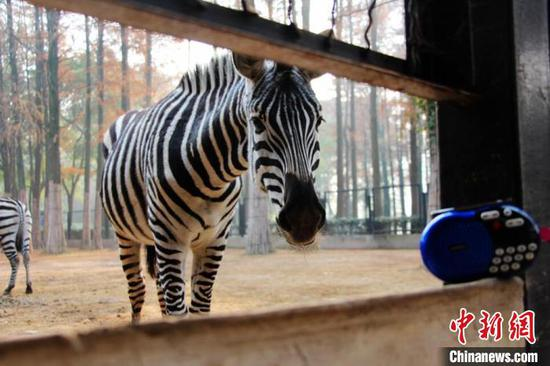Desensitization training reduces noise's influence to animals at Wuhan Zoo