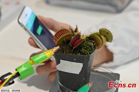 NTU Singapore scientists develop plant 'communication' device